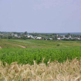 Кадастровая стоимость земли сельхозназначения: как определить?